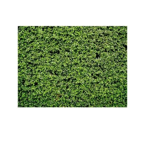 2.1m x 1.5m Green Leaves Wall Birthday party photography background cloth - 2